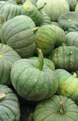 Green Pumpkins  https://www.pinterest.com/pin/461056080581064641/