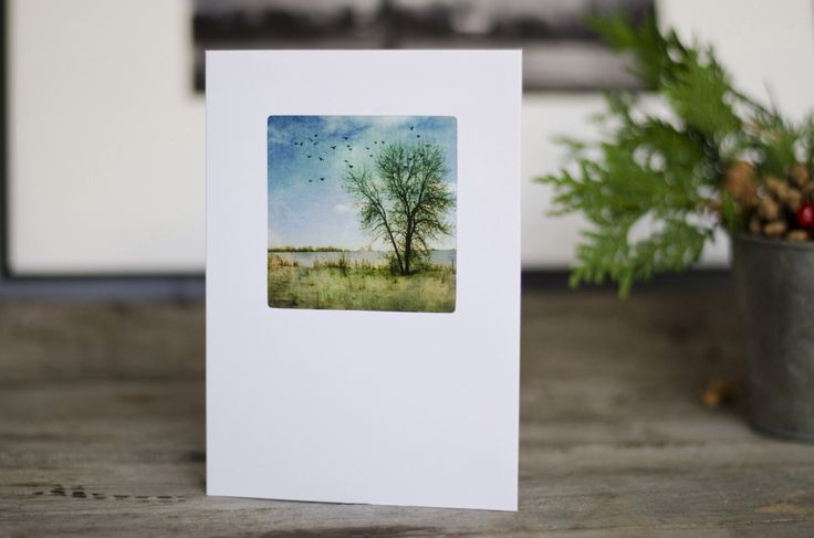 Holiday Greeting Card, 5x7, flying birds, christmas card, bare tree, cards, blank, winter card, winter, tree photo, nature photography, cold by HolgaJen on Etsy