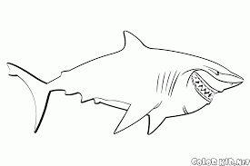 Risultati immagini per squalo da colorare