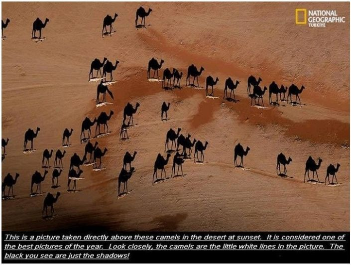 ...: Photographers, Desert, National Geographic, Sunsets, Pictures, Perspective, Black Camels, Photography, Camels Shadows