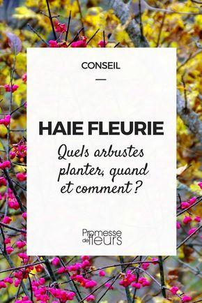 La haie fleurie composée d\'arbustes persistants ou non offre l\'avantage d\'être naturelle et varié : nos conseils pour la créer et la planter.