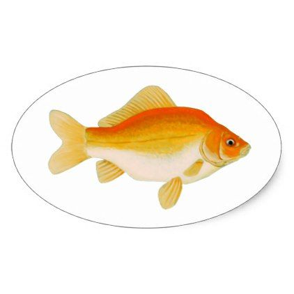 Common Goldfish Oval Sticker - gold gifts golden customize diy