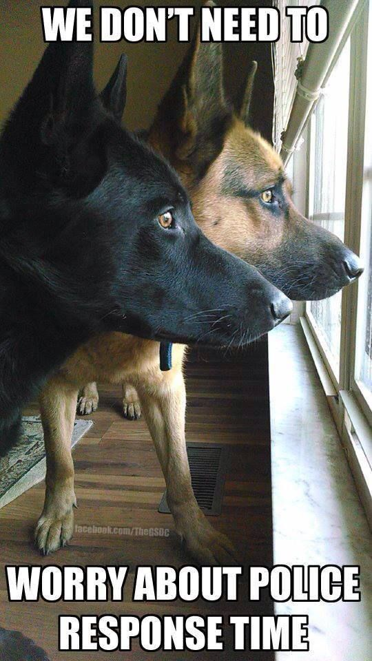 No you're there! #dogs #pets #GermanShepherds Facebook.com/sodoggonefunny
