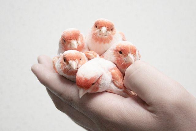 birds in her hand