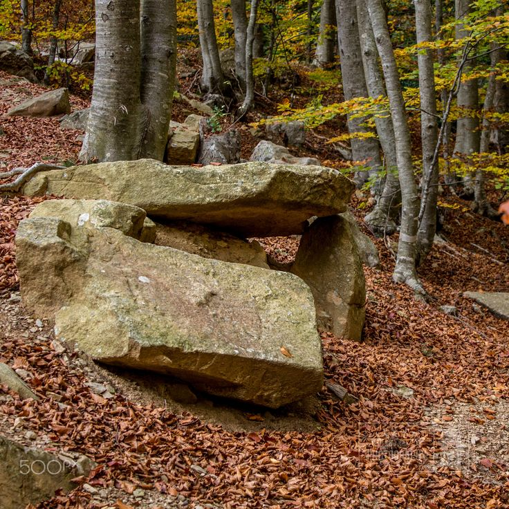 Tardor al Montseny - Walking in the woods, at Montseny in Autumn