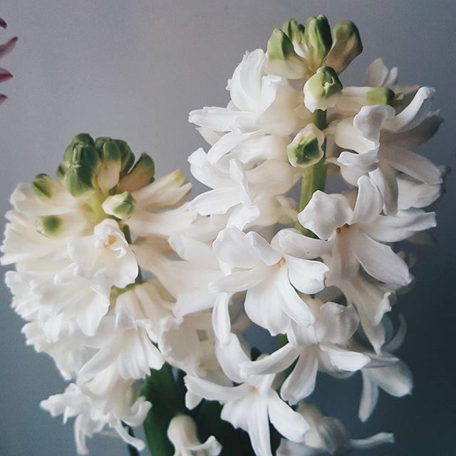 Доброе утро ☕   С женским днём! Любите💕, мечтайте👸, вдохновляйте💃! Будьте всегда желанной, любимой и неотразимой! Пусть весна принесёт много идей, надежд на их свершение и веры в результат!  Здоровье, удача и достаток всегда будет с вами! Все желания исполнятся и жизнь будет наполнена мгновениями бесконечного счастья🌷🌷🌷  #доброеутро #весна #март #8марта #праздник #фотонателефон #цветы #гиацинт #природа #поздравления #Пушкино #Подмосковье #Московскаяобласть #Наткаицветы #goodmorning…