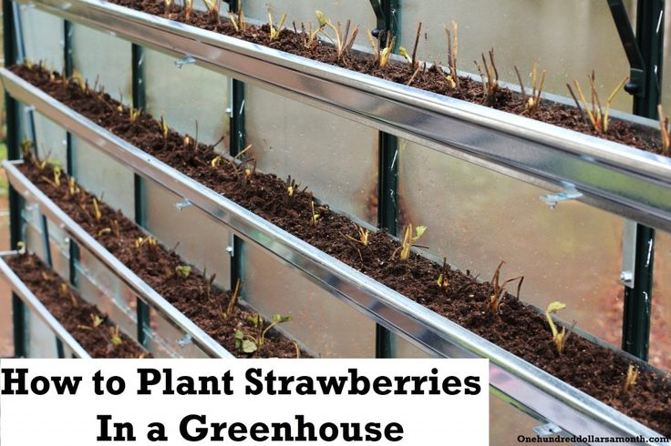 how to install gutters in greenhouse for growing strawberries