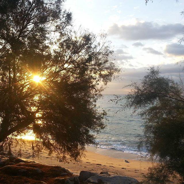 . Mediterráneo. Amanecer de un día soleado. Ganas de sol. Mar atolondrado . Árboles solemnes y sosegados.  Me rindo ante el nuevo día y su solemnidad. Madrugones que merecen la pena.  #adelapla . #madrugonesalenrtadores #solmarivida #mediterraneansea . #miradascreativas #visionesapreciativas #pensamientosdetrastero #sentimientossolubles #diasinstantaneos #historiasdeslmacen #rinconesamables #composicionescaseras #momentosdedesconexion #postalesparalareflexion