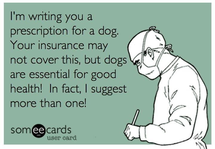 Dogs are good for you!