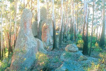 """images of indigenous history of Gulaga - Mt Dromedary - Google Search - ancient granite formations revered by Yuin people of Tilba Tilba & Bermagui.  """"The rainforest is a spectacular sight with pinkwood and sassafras trees draped with long green moss and lichen ..."""" -statement from website - Gulaga National Park Tillba Tilba - Bustlebox."""
