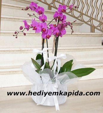 Balıkesir Çiçekçi İkili Mor Orkide