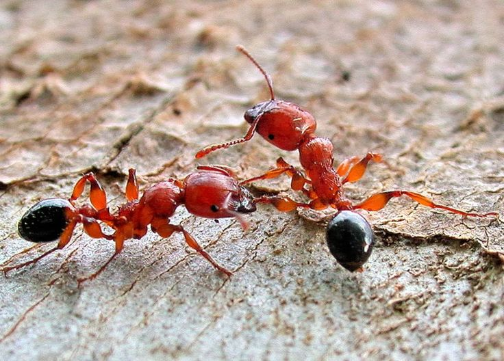 17 Best Metallic Insects Images On Pinterest Insects