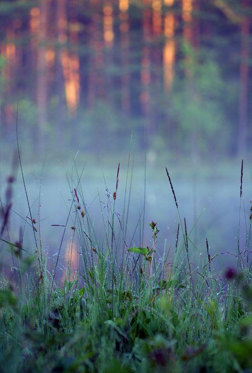 kissmegray:    Sunrise by ~Vierasaine