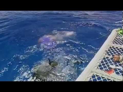 Ragadozok Testközelben - Cápák Nyomaban (teljes film)