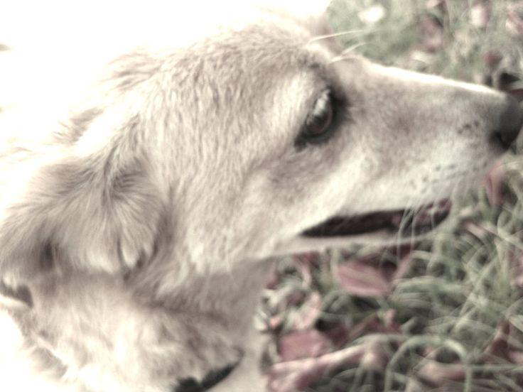 I love my dog by AndrianaS.deviantart.com on @DeviantArt