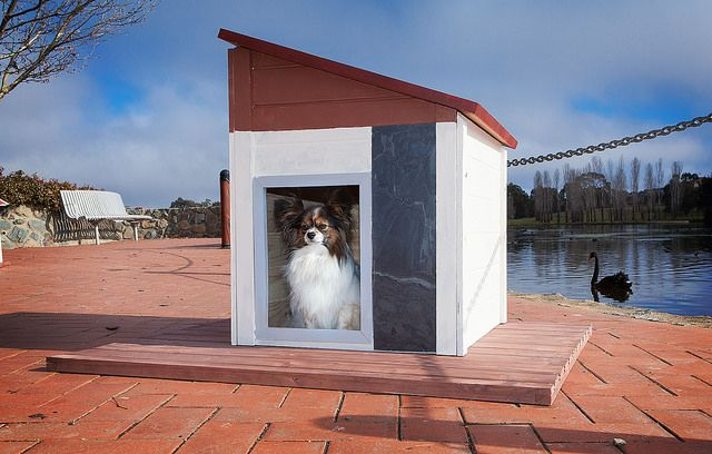 Phoebe sits proudly in her contemporary styled RitzPetz dog house, at Canberra's beautiful Yerrabi Pond