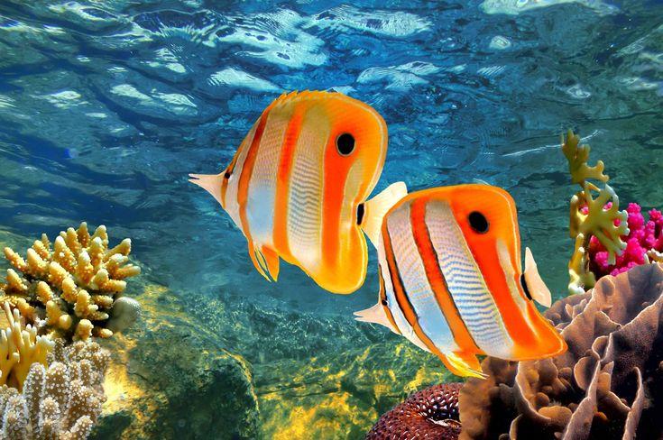 Great+Barrier+Reef+Animals | Gruppenreise durch Australien - Westtours Gruppenreisen