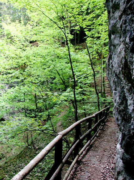 Door hoge rotswanden omgeven natuurlijke bossen en botanische tuinen, een galerij langs een rotswand die eindigt in een spleet waar je doorheen loopt en een grote grot met diverse openingen waar je doorheen loopt. Volg de link beneden en lees meer over wandelen naar Pokljuka kloof. / foto bron Han Vroon / @MijnSlovenie