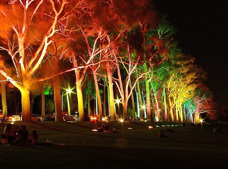 Low Voltage LED Landscape Lighting Kits With Colourfull Trees Lighting