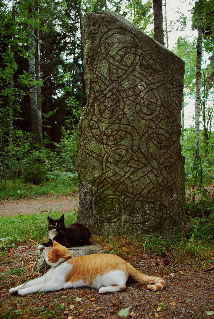 Runes and Cats: Crazy Cats, Kitty Cats, Vikings Kitty, Celtic Knots, Vikings Cats, Runes Stones, Cats Lady, Almighti Vikings, Two Cats