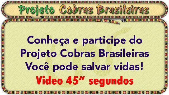 Video 640px e 45 segundos com apresentao do Projeto COBRAS BRASILEIRAS para ser usado como apoio na captao de patrocnio utilizando financiamento coletivo online ou crowdfunding. http://www.cobrasbrasileiras.com.br/como-patrocinar.html O Projeto COBRAS BRASILEIRAS, constituir de um banco de dados fotogrfico e de informaes, que ser utilizado na identificao rpida e eficiente de cobras e serpentes, bem como fornecer subsdios para as medidas iniciais quanto ao diagnstico e tratamento de acidentes…