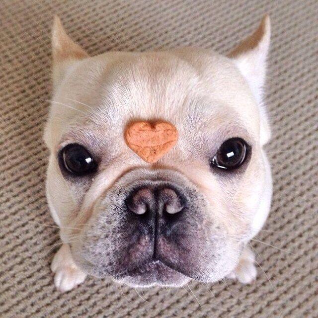 Amo a esta raza de perros!!!!!!