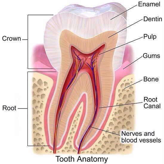 . This is #love ! . #dent #toothtooth #teething #teeth #dentist #dental #dentista #dentistry #dentalassistant ist #dentista #dentistry #dentistlife #dentistasfit #dentisttime #dentistvisit #dentisttobe #dentistoffice #teeth #teethsmile #teethgoals #teethcleaning #care #smile