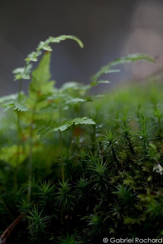 En forêt de Rambouillet - ©  Gabriel Rochard  http://jardinscosmopolites.blogspot.co.uk