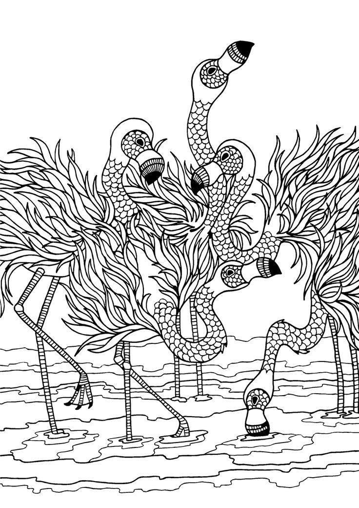 flamingos adult colouring page colouring in sheets art craft art supplies i