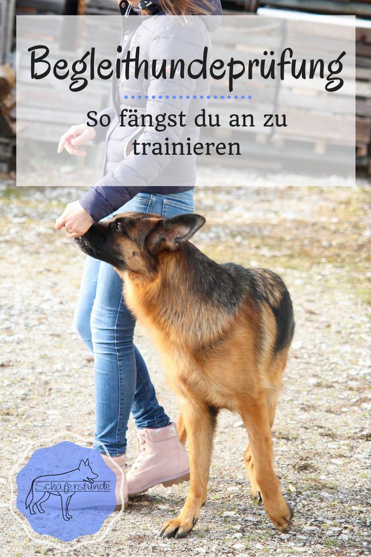 Wir haben angefangen für die Begleithundeprüfung zu trainieren und zeigen dir, wie das am besten geht   Hund   Deutscher Schäferhund   Hundesport   Hundeerziehung   Unterordnung   Gehorsam   Hundetraining