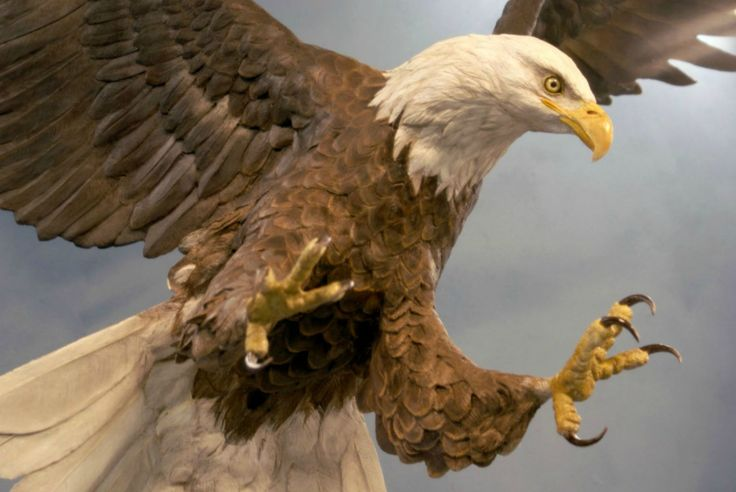 flying sculpted realistic bald eagle (National Eagle Center in Wabasha) | Blue Rhino Studio