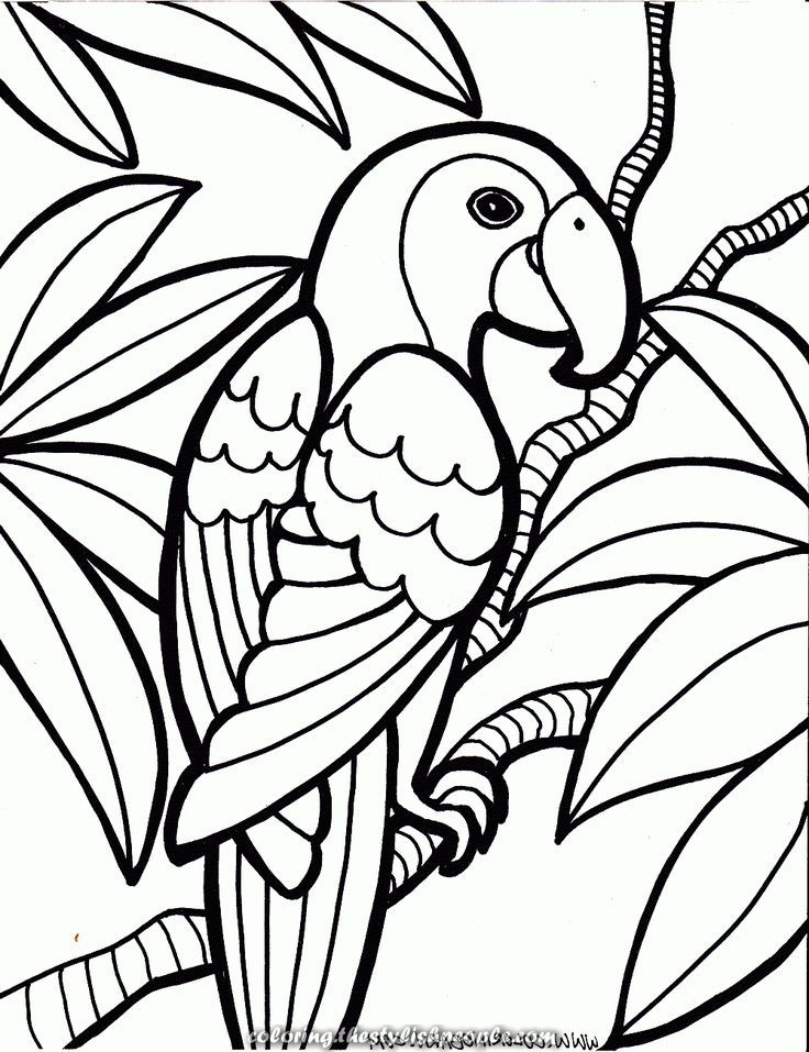 Parrot Coloring Pages Animal Coloring Pages Bird Coloring Pages