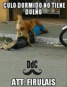 @Diarios de un caballero. El que sabe, sabe... El perro sabe... Grande firulais!!! ;)