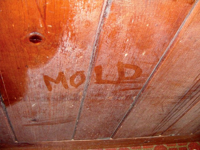 How to Remove Mold from Wood Furniture - http//articleplusx/