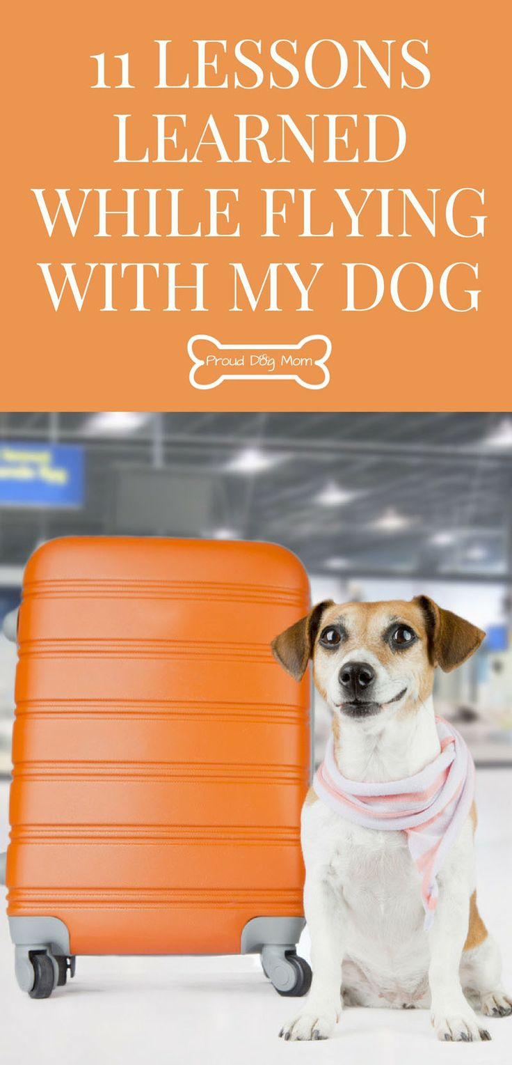 11 Lessons Learned While Flying With My Dog In-Cabin | Dog Travel Tips |