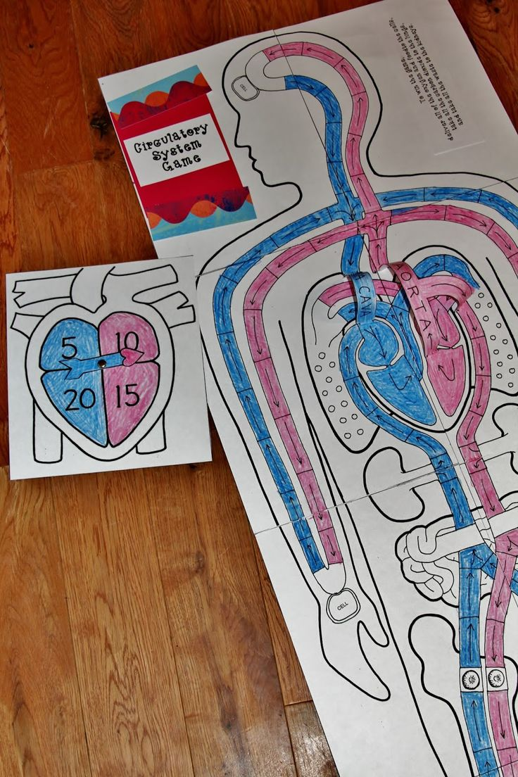 Circulatory System Lessons, Worksheets and Activities