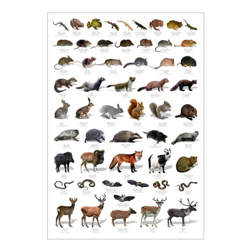 Wildlife Poster Learning Poster Eco Friendly Poster Wildlife Identification Chart