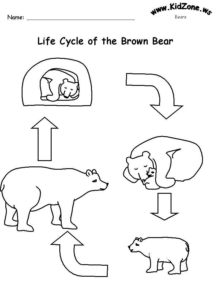 life cycle of a polar bear - Khafre