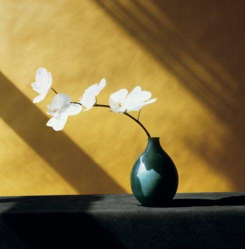 Orchids 1982, Robert Mapplethorpe
