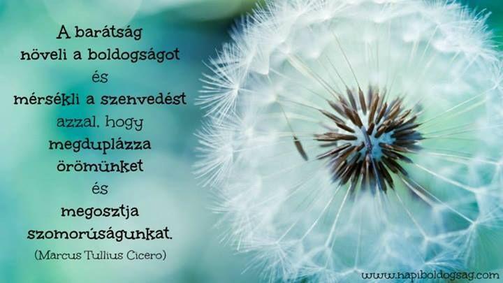 Cicero idézete a barátságról. A kép forrása: Napi Boldogság # Facebook
