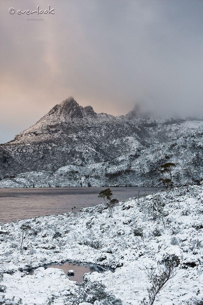 snow storm at dawn, Cradle Mountain, Cradle Mountain-Lake St Clair National Park, Tasmania, Australia