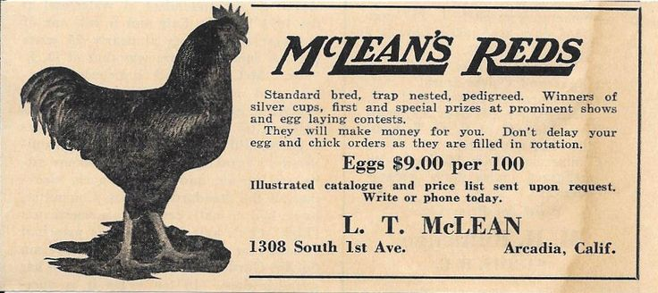 ORIGINAL 1934 AD FOR MCLEAN'S REDS POULTRY, FOR SALE BY L. T. MCLEAN IN ARCADIA, CALIFORNIA. A
