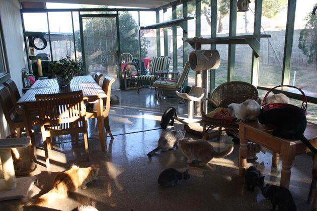 cat enclosure: Cat Furniture, Dogs And Cat, Cat Enclosures, Building, Aaa1 Catio, Cat Rooms, Catio Showcase, Catio Ideas, Catio Shelf