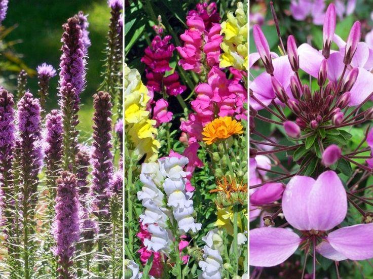 A szárazságtűrő virágok a hosszabb esőmentes időszakokat is gond nélkül átvészelik. Jó, ha van belőlük a kertünkben!