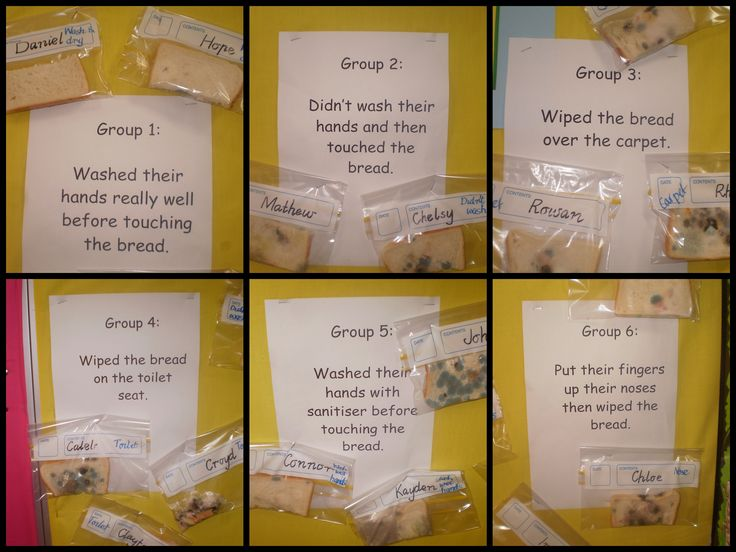 A few weeks ago, ECE3 completed an experiment on germs. We viewed a video clip online about  how easy germs are spread. We discussed the importance of washing our hands after visiting the toilet an...