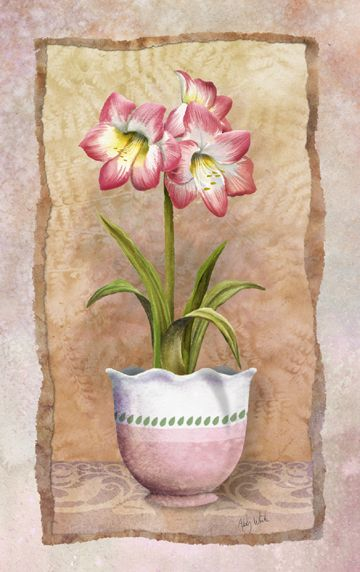 Amaryllis by Abby White ~ floral art