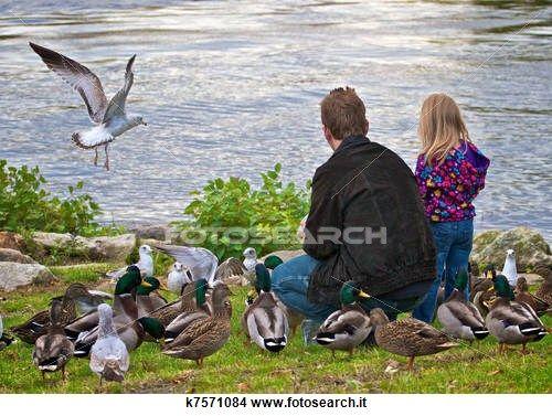 Archivio Fotografico - padre figlia, alimentazione, uccelli k7571084 - Cerca Archivi fotografici, Foto murali, Immagini e Foto Clipart - k7571084.jpg