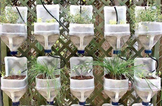 Cómo hacer un mini huerto con botellas de plástico - Hogar Total