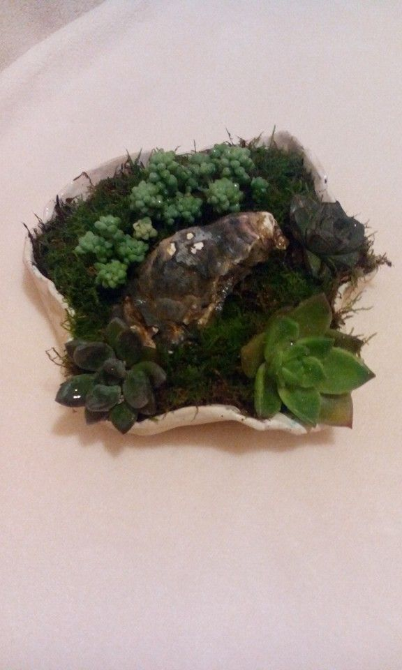 plante suculente in scoica