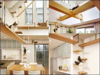 """Stairs, 'cat' walks, and exposed beams make this cat friendly house design an indoor playground for cats. """"plus Nya N Plan 2"""" - GIGAZINE"""